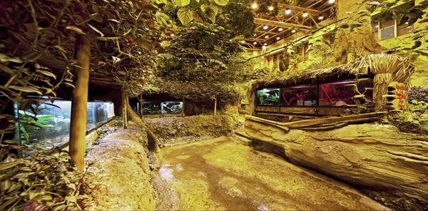 غابات الامازون في اكواريوم اسطنبول